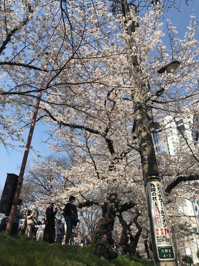 バレエ桜2