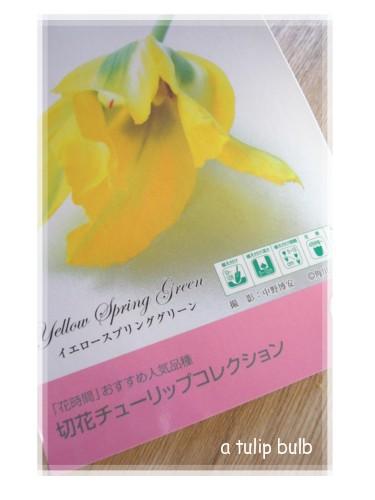 a tulip bulb