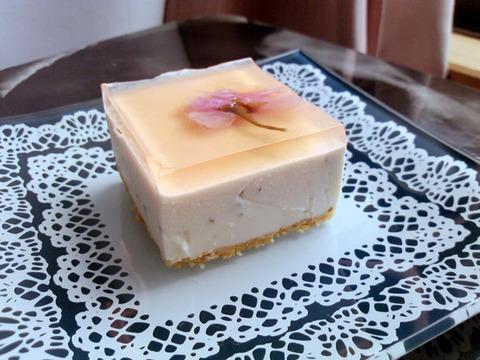 桜レアチーズケーキ