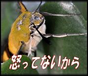 【無口なムシたち】 18