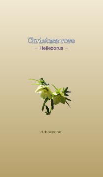 bocconei 01