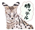 31 a待ッテル