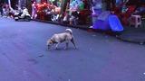 2017-08-08玉林の犬
