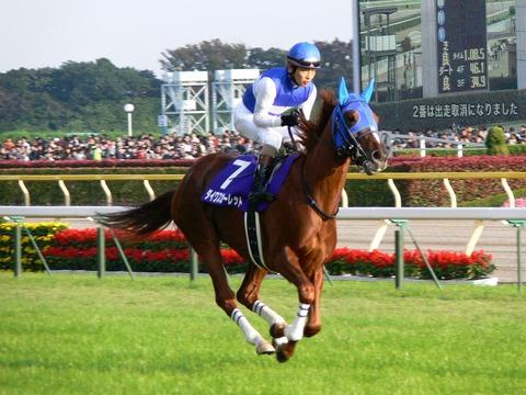 Daiwa-Scarlet_20081102tokyo11race