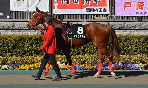 660px-Matera_Sky_Hyacinth_Stakes_2017