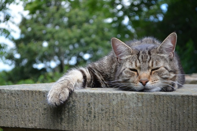 cats-168144_1920