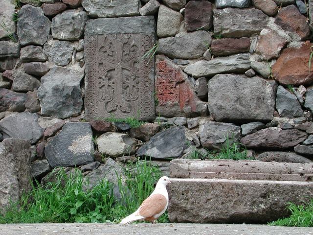 peace-dove-172195_1920