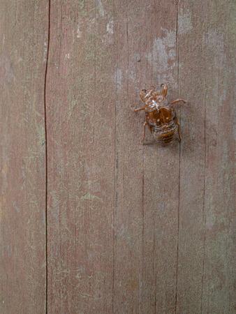 ゴキブリが急増中、ステイホームで