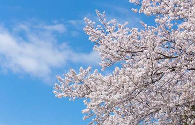 春の断捨離