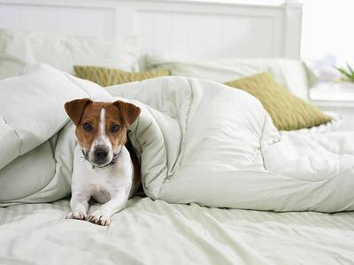 ベッドに潜むダニ