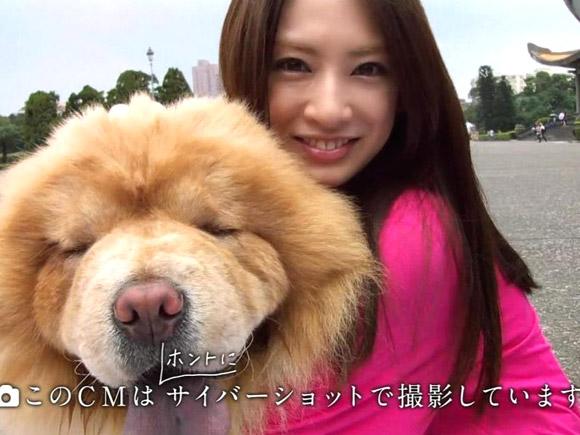 北川景子とわんこ