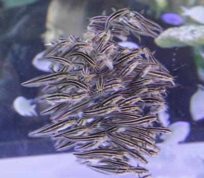 美ら海水族館-6993