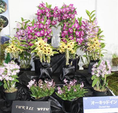 海外テーブルディスプレイ Orchids Inn-6820