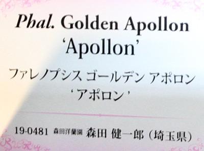 Phal. Golden Apollon 'Apollon' -6783