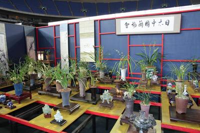 日本中国蘭協会-6977