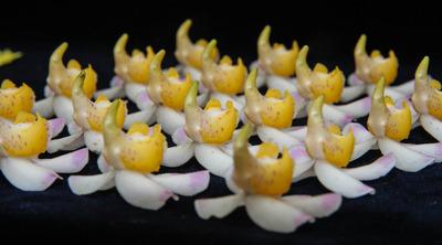 花並べ2013-3507