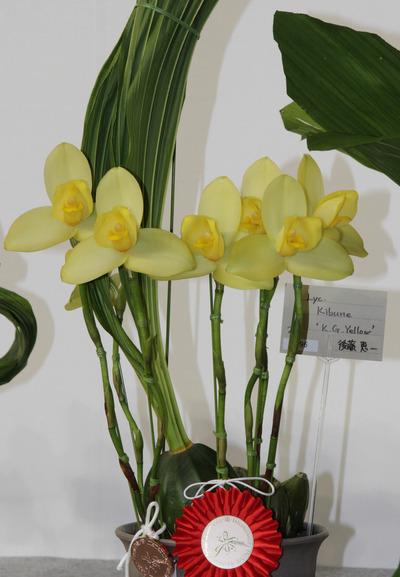 Yellow' BM-6365