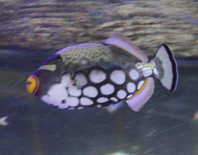 美ら海水族館-6790