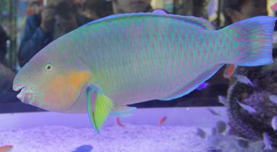 美ら海水族館-7001