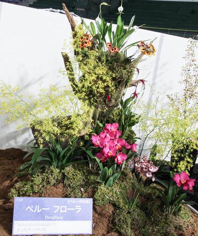 海外テーブルディスプレイ Peruflora-6807-2