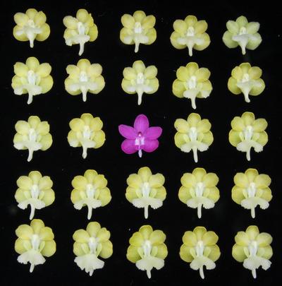 花並べ2013-3451
