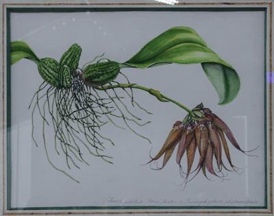 Phalaenopsis-6829_0000