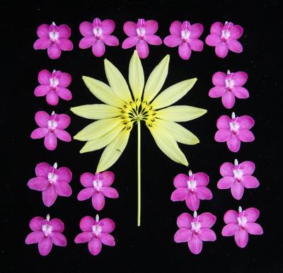 花並べ2013-3512