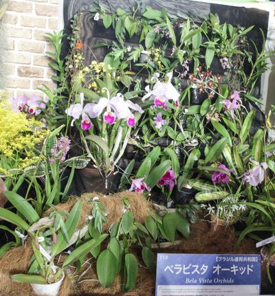 海外テーブルディスプレイ Bela Vista Orchids-6810