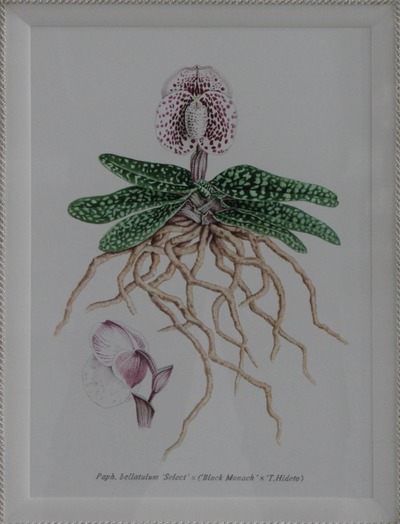 bellaturum -6834_0000