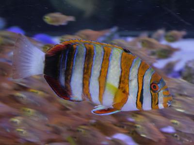 美ら海水族館-6781