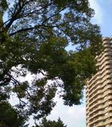 木とビルと青空