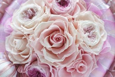 pink rose by saiba-