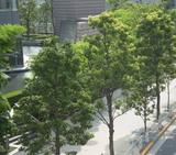 夏 噴水と樹木