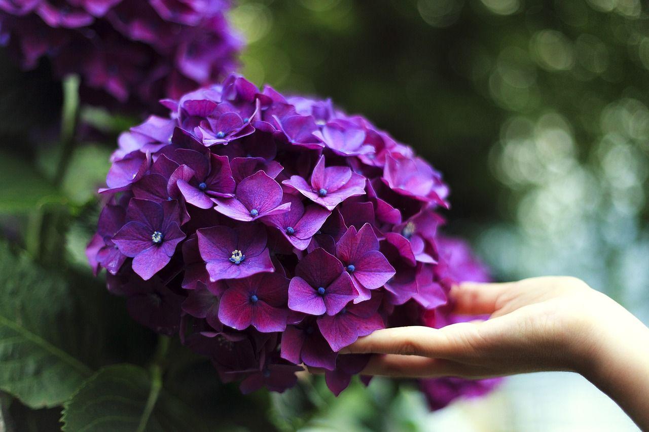 bloom-1853360_1280