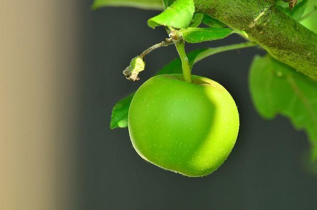 apple-1532055_640