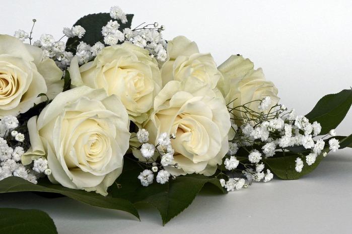 roses-white1420727_1920
