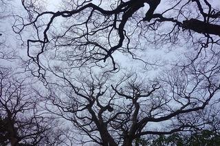 woodland-669738_640