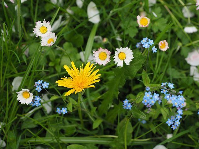 wildflowers-1260737_640