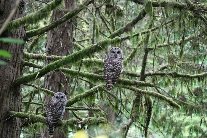 owl-2650635_1280