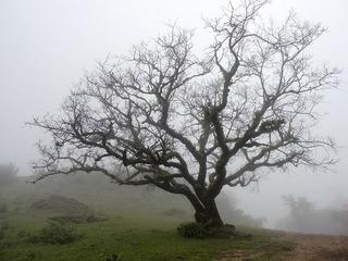 bare-tree-1031377_640