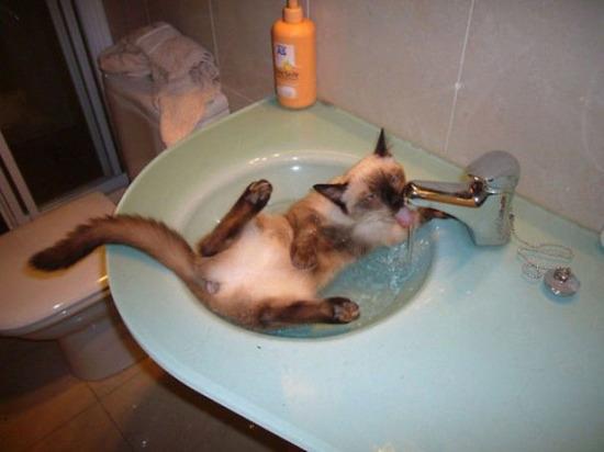 cat-loves-water-bath-31__605