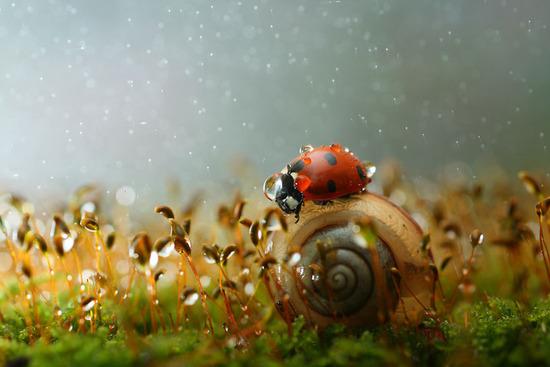 macro-photography-vadim-trunov-6__880