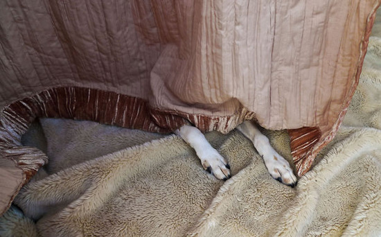 hiding-ninja-funny-dogs-211__605