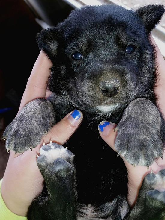 chubby-puppies-bear-cub-look-alikes-22__605