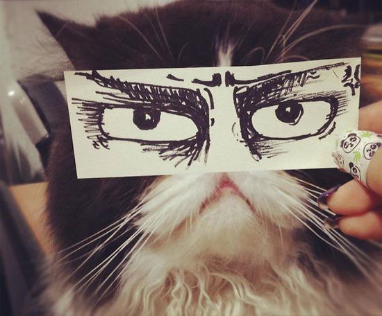 cat-eyes__605