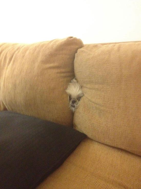dogs-hide-seek-5__605