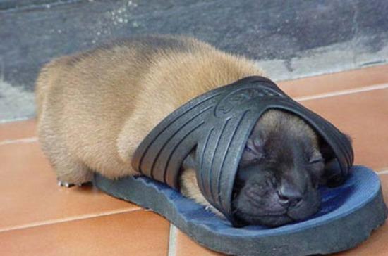 funny_dog_sleeping_aa102