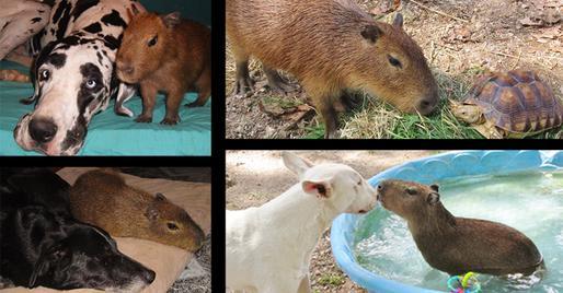 storymaker-amazing-animal-friendships-dogs-cute-1109073-514x268