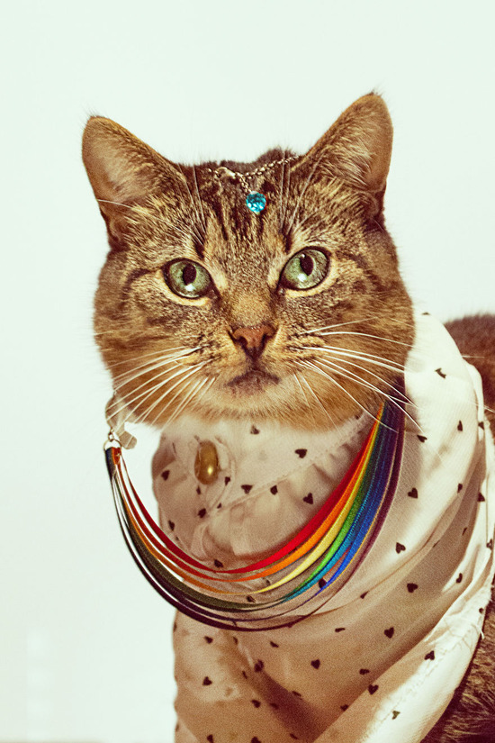 Photographer-Takes-Beautiful-Fashion-Portraits-of-His-Cat3__880