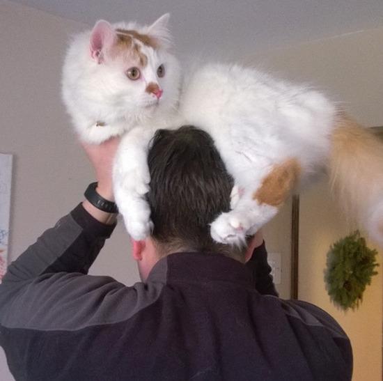 cat-hat-funny-52